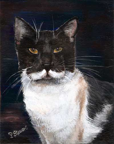 Grey and White Cat with mustache