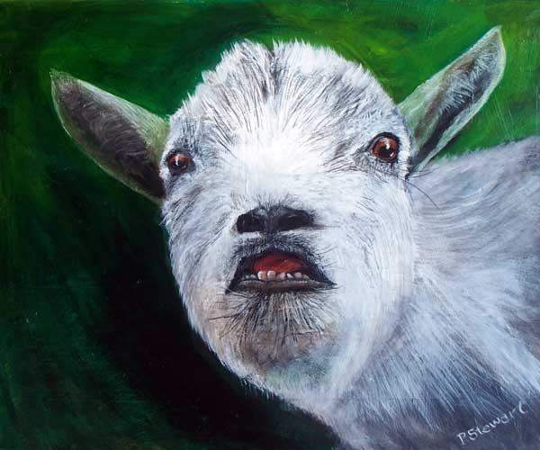 Pygmie Goat Pet Portrait