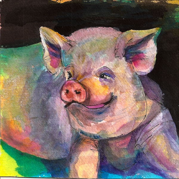Mojo, A colorful Pig