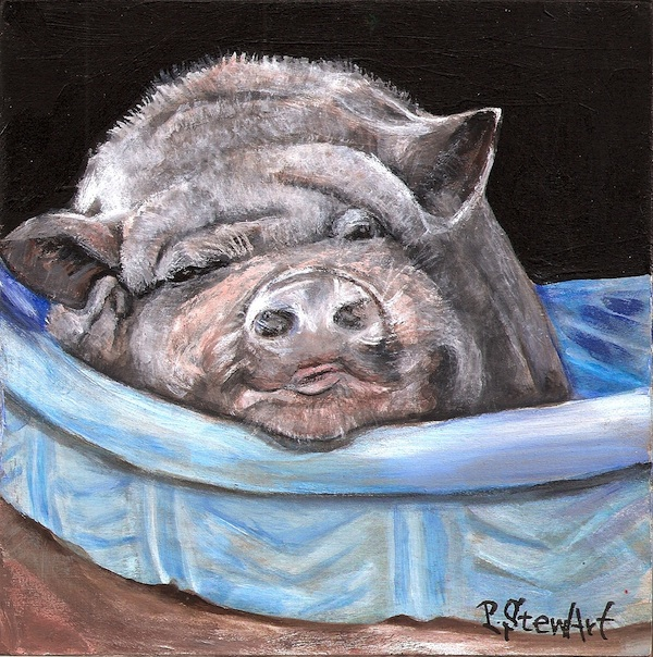 Pig Newton, Sleepy Pig in a Bath Tub